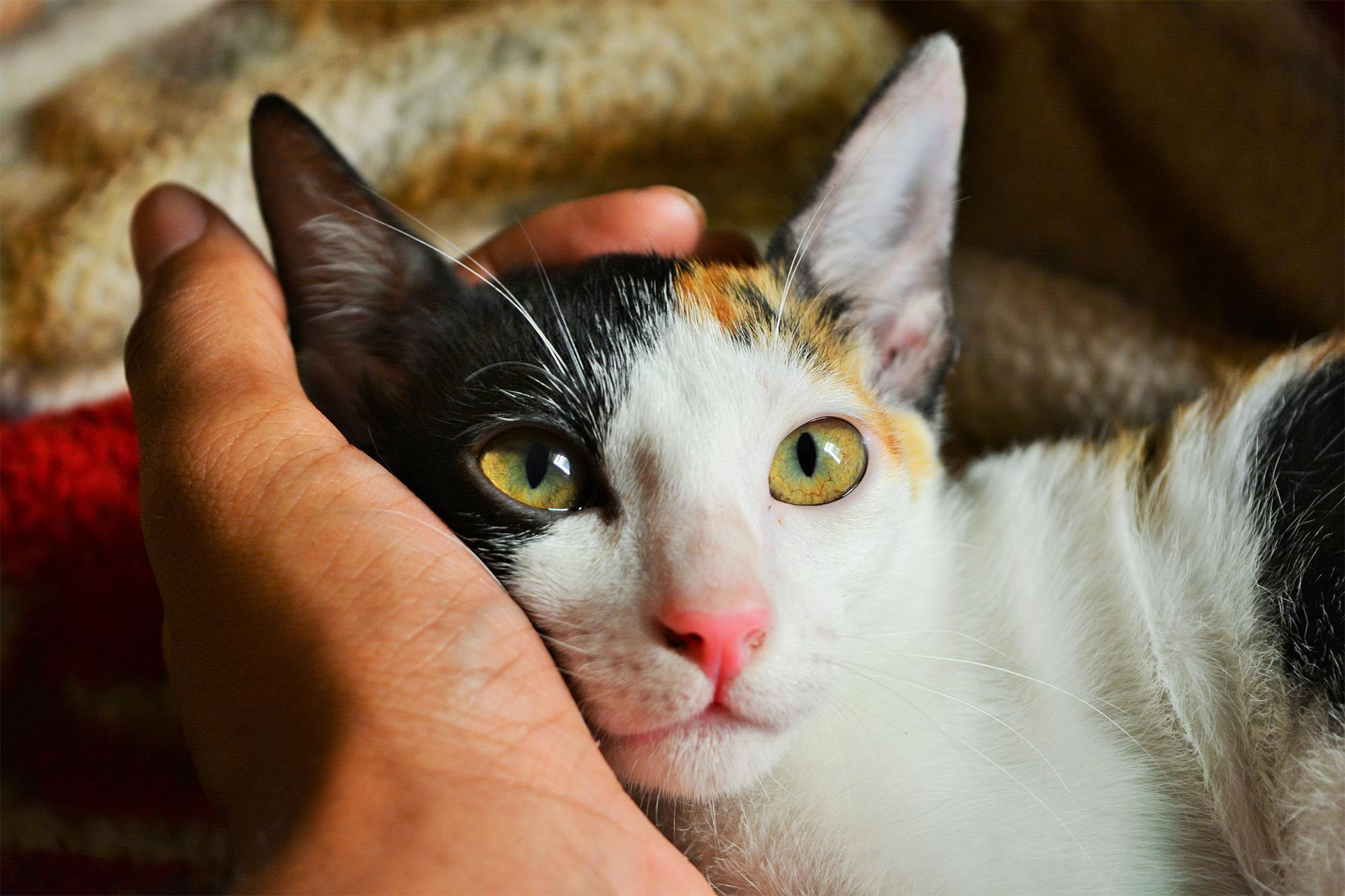 gato mindfull